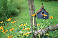 63821-19104 Birdhouse on rustic fence with Summer Nights Sunflower Helopsis, Marion Co., IL