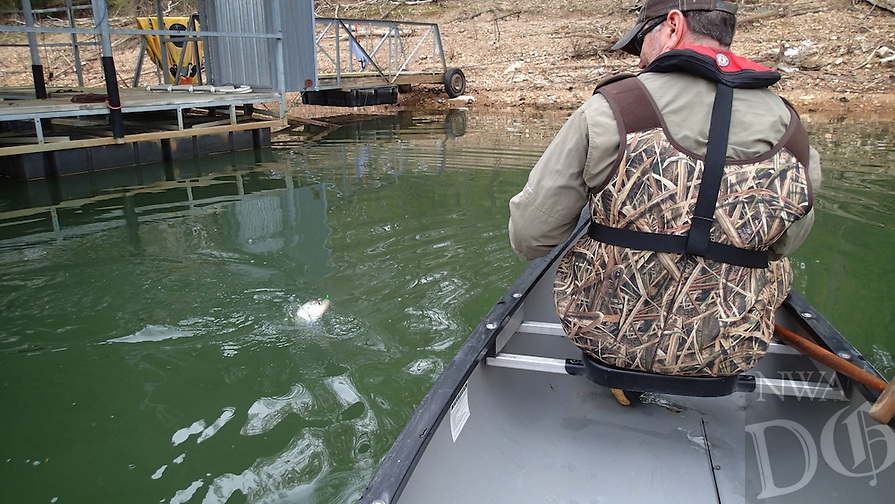 NWA Democrat-Gazette/FLIP PUTTHOFF <br /> Jon Stein, fisheries biologist with the Arkansas Game and Fish Commission, tussles with a crappie April 22, 2016 in the Pine Creek arm of Beaver Lake.