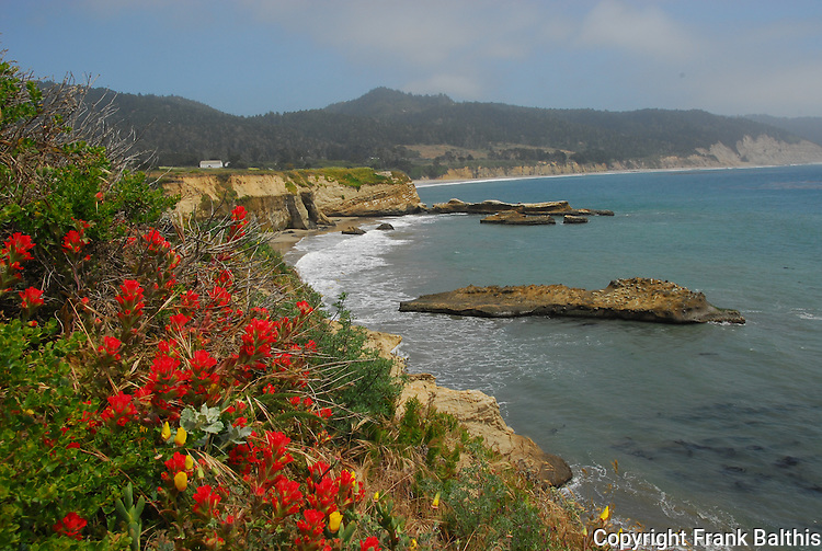 Paintbrush blooming at Ano Nuevo SR