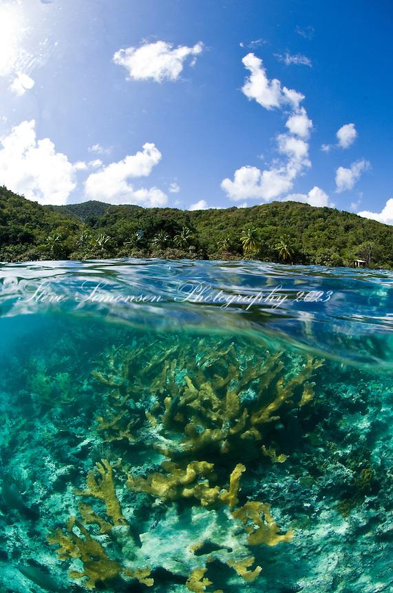 Split level image of elkhorn coral at Hawksnest Bay.St. John, US Virgin Islands