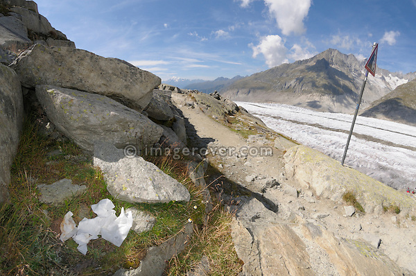 Switzerland, Valais, Western Europe, Jungfrau Region, Aletsch Glacier (UNESCO world heritage site). Used toilet paper carelessly disposed on the panorama trail nr. Märjelensee.
