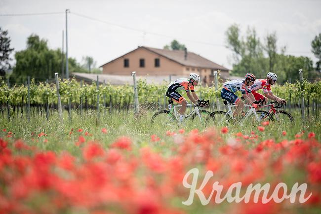 today's breakaway group passing the many poppies along the way: Damiano Cima (ITA/Nippo-Vini Fantini), Marco Frapport (ITA/Androni Giocattoli) & Mirco Maestri (ITA/Bardiani - CSF)<br /> <br /> Stage 11: Carpi to Novi Ligure (221km)<br /> 102nd Giro d'Italia 2019<br /> <br /> ©kramon