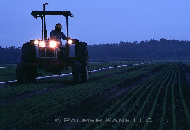 Tractor in field at dusk.