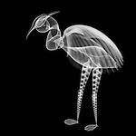 X-ray image of a wading bird (white on black) by Jim Wehtje, specialist in x-ray art and design images.