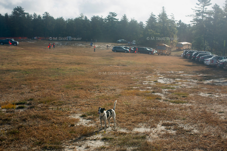 A dog stands in a field during the AD Makepeace Company's 10th Annual Cranberry Harvest Celebration in Wareham, Massachusetts, USA. AD Makepeace is the world's largest producer of cranberries. These cranberries, wet harvested with varied colors, are destined for processing into juice, flavoring, canned goods and other processed foods.