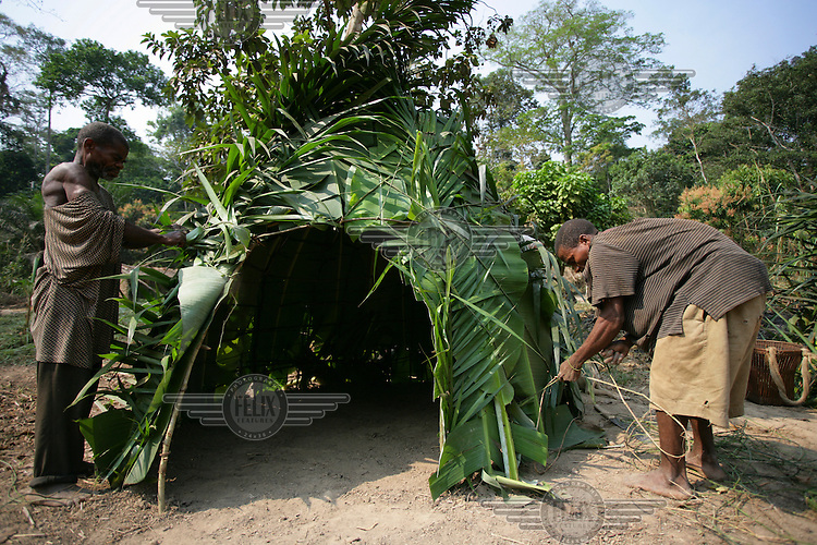 Aka pygmy men building a house from leaves and branches.