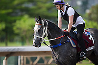SHA TIN,HONG KONG-APRIL 25: Chatautaqua,trained by Michael Hawkes,exercises in preparation for the Chairman's Sprint Prize at Sha Tin Racecourse on April 25,2016 in Sha Tin,New Territories,Hong Kong (Photo by Kaz Ishida/Eclipse Sportswire/Getty Images)