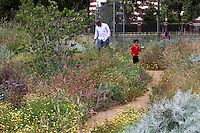 Family walking through pollinator garden of flowering California wildflowers at the Natural History Museum of Los Angeles