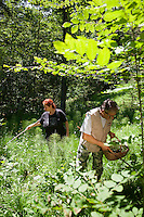 Forni di Sopra, Dolomiti Friulane, Italy, June 2011. Mushroom hunters search for Fungy Porcini.  Dolomiti Friulane Regional Park is part of the western mountain area dominating the upper plain of Friuli. It lies between the rivers Tagliamento and Piave. The area is characterized by the wilderness of its large valleys which present nor main roads or villages and stretch among the Dolomitic peaks. Photo by Frits Meyst/Adventure4ever.com