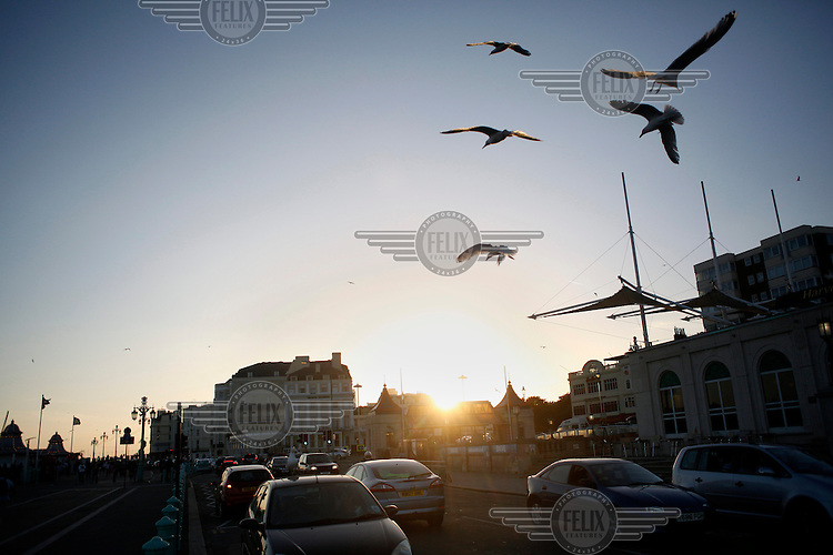Seagulls fly over cars on the promenade in Brighton.