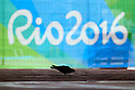 General view, <br /> AUGUST 10, 2016 -  : <br /> Rio 2016 Olympic Games in Rio de Janeiro, Brazil. <br /> (Photo by Sho Tamura/AFLO SPORT)