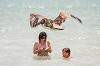 Pelican swoops over couple playing in Gulf of Mexico near historic Naples Fishing Pier, Naples, Florida, USA ... photo by Debi Pittman Wilkey