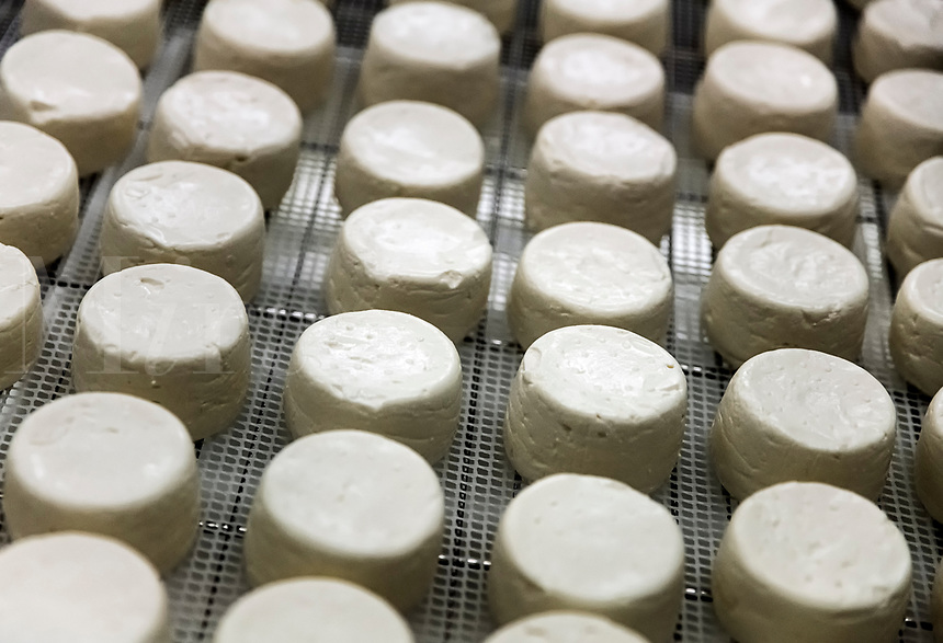 Goat cheese wheels.