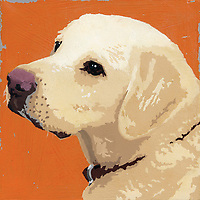 Portrait of Golden Retriever dog ExclusiveImage