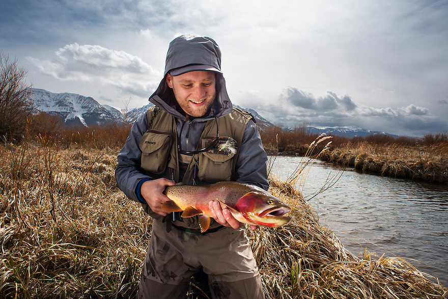 An angler holds a Yellowstone cutthroat trout caught from a small creek in western Montana.