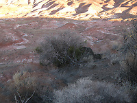The Evening Sun Setting on the Painted Desert, Petrified Forest National Park, near Holbrook Arizona. 23 March 2008 just off Historic US Route 66.
