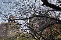 A view through the trees on the opposite side of the street from the The Gen Chauncey M. Hooper Towers, that hosts the Harlem Internet Computer Access program taught by instructor Merle Bush in Harlem, Manhattan, NY, USA on November 21, 2011.