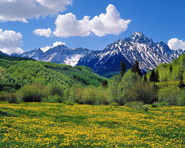 Mount Sneffels with Dandlylion flowers in the spring, Telluride, Colorado, USA. John guides custom photo tours in the Sneffels Range and throughout Colorado.
