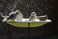 Bird Bathing Spree