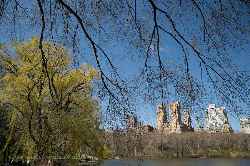 Central Park West Apartment through Weeping Willow in Central Park