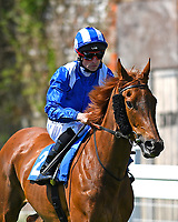 Mahaarat ridden by Dane O'Neil goes down to the start of The Smith & Williamson British EBF Fillies' Handicap (Class 3)   during Afternoon Racing at Salisbury Racecourse on 17th May 2018