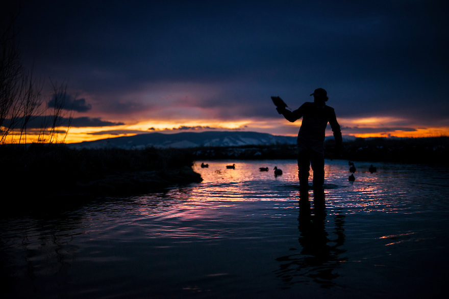 A waterfowl hunter sets decoys as the clock ticks on shooting light in western Montana.