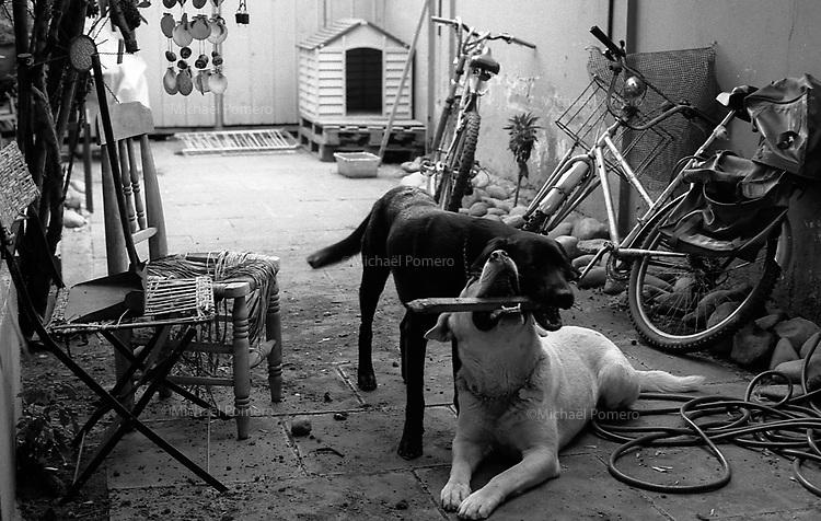 01.2010 Santiago de chile (Chile)<br /> <br /> Chien en train de jouer dans la cour.<br /> <br /> Dogs playing in the yard.