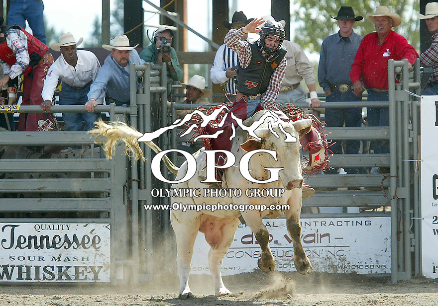 28 August, 2005:  Pistol Robinson riding the bull Jungle Juice holds on during the Extreme Bulls competition Sunday at the Kitsap County Fair Grounds, Robinson was not able to hold on for 8 seconds during the first round of competition in Bremerton, WA.