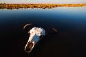 Botswana, Chobe National ark, Savuti, Cape buffalo or African buffalo (Syncerus caffer) skull in water