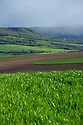 29/04/14 - MASSIF DU SANCY - PUY DE DOME - FRANCE - Polyculture dans le Massif du Sancy. Levee de ble dur - Photo Jerome CHABANNE