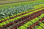 Agriculture / Landwirtschaft