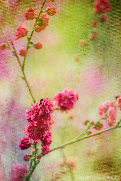 Textured photograph of delicate pink blossoms against a green background