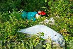 illegal dumping Dumping in Ballinorig.