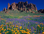 Tonto National Forest, AZ   <br /> Field of Mexican poppies and Coulter's lupine under spires of the Superstition Mountains, Superstition Wilderness