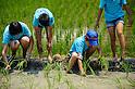 Rice planting ceremony at Hikamianego Shrine