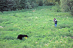 Photographing Black Bear