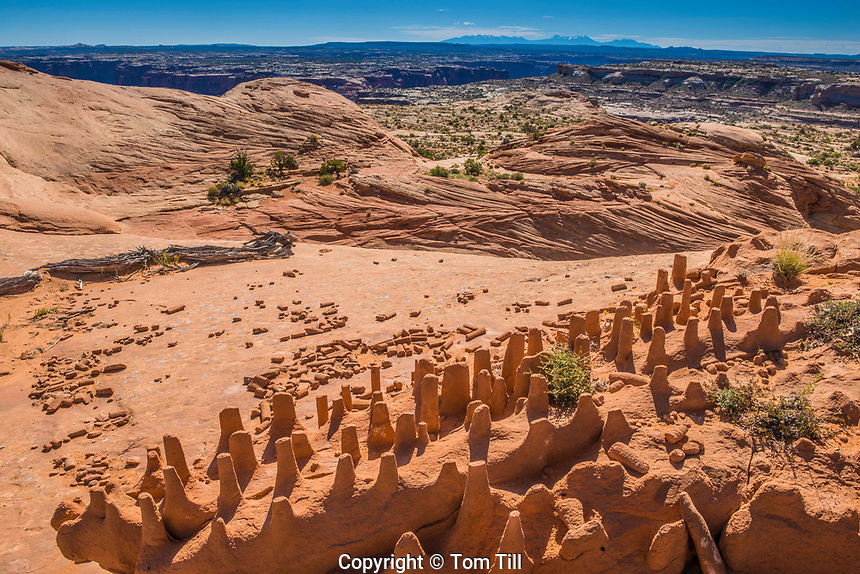 The Dragons Teeth,  Proposed wilderness and natational monumnet, Greater Canyonlands, Utah