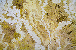 Layers of biofilms or lichens on a windshield eaten away by a hungry insect, Honshu, Japan