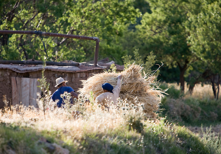 Farmers bundle wheat late in the small farming community of Tisselday in the Atlas mountains of Morocco.