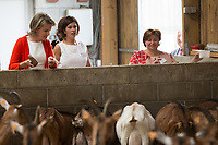 La reine Mathilde de Belgique visite la ferme &quot; La Petite Campagne &quot;, &agrave; Bovesse en Belgique.<br /> Belgique, Bovesse, 13 juin 2017.<br /> Queen Mathilde of Belgium pictured during a visit to the farm 'La Petite Campagne', specialized in the retail sail of parsley, cheese dairy and goat breeding, in Bovesse, Namur province.<br /> Belgium, Bovesse,13 June 2017.