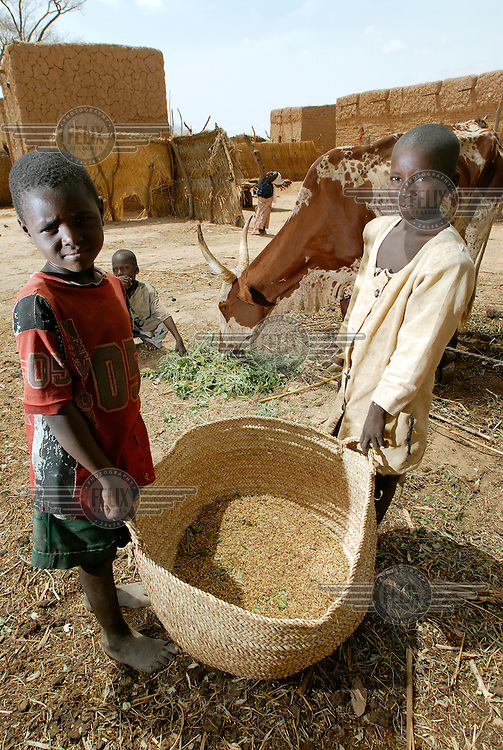 Two young boys carry a large basket of millet through their village while another feeds horned cattle.