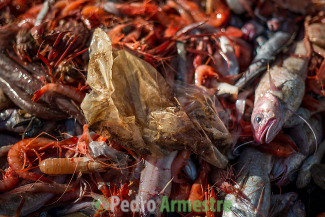 """A picture taken on November 4, 2015 shows plastic waste among marine life caught in a net on a fishing boat off the coast of Villajoyosa . Ecoalf, a Spanish Madrid-based firm founded in 2010, has already launched """"a new generation"""" of clothes and accessories made from plastic bottles, old fishing nets and used tires found on land. © Pedro ARMESTRE"""