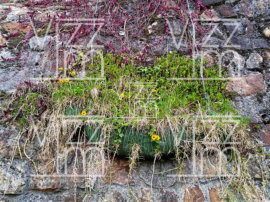 BOGOTA- COLOMBIA,Pots for plants in the mountain on the way to the Sanctuary of La Virgen Morena de Monserrate .  Photo: VizzorImage / Felipe Caicedo / Staff