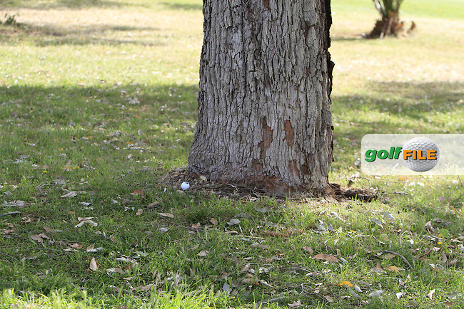 Jamie McLeary (SCO) tee-shot landed beside the bottom of a tree during Round 3 of the ISPS HANDA Perth International at the Lake Karrinyup Country Club on Saturday 25th October 2014.<br /> Picture:  Thos Caffrey / www.golffile.ie