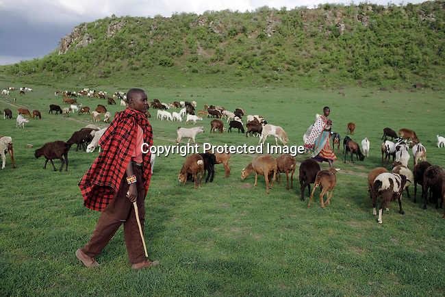A Maasai man walks with his sheep. In the background Lake Elementaita and Soysambu farm. Photo: Per-Anders Pettersson/Getty Images