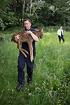 "© Joel Goodman - 07973 332324 . Stockport , UK . Veterinary surgeon SIMON CONSTABLE carries the tranquilised deer to a safe place in Reddish Vale Country Park before bringing him round , as RSPCA Inspector Gilly Howard keeps guard and directs dog walkers clear . A wild deer which was discovered in a park by the busy Manchester Road in Stockport has been rescued after three days . The park was closed and locked by Stockport Council officials on Monday 24th June after the young male started bolting across the playing field and playground and butting its head and antlers against railings . But with the gates locked , the young animal could not escape . For three days local people came out to watch the deer from the fence as it hid in bushes around the edge of the park , occasionally venturing out across the playing pitch and in the direction of the busy A626 road . The landlord at "" The Hind's Head "" pub opposite , Stuart Kirkham , a Manchester United fan , named the beast "" Ronaldo "" because of its red colouring . After three days , with no hope of escape under its own steam and with the park still closed , the RSPCA and council brought in a veterinary surgeon to help . The animal was tranquilised and driven to nearby Reddish Vale Country Park , where he was brought round and released back in to the wild . Photo credit : Joel Goodman"