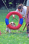 Dog Going Through Ring