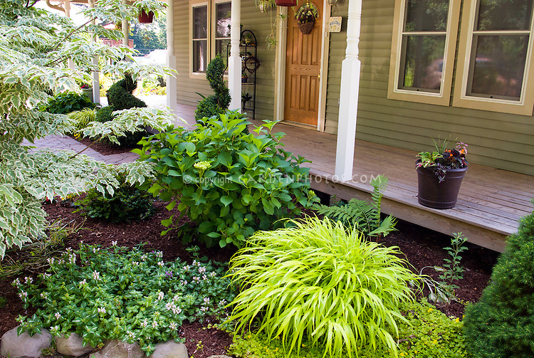 Small Entrance garden front of house yard curb appeal plantings, with groundcovers, perennial ornamental grass Hakonechloa Allgold aka All Gold, evergreens, variegated dogwood tree, porch, container bucket pot, hydrangea, hanging pots, groundcovers lamium and lysimachia creeping jenny