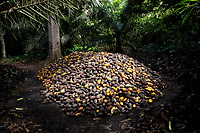 A pile of cocoa pods lies on the ground in Lucien kro camp.