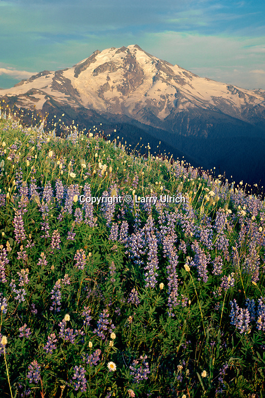 Glacier Peak from Meadow Mountain<br /> Glacier Peak Wilderness<br /> Cascade Range<br /> Washington